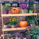 Exciting Autumn Home Updates